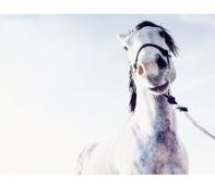 Horse Anna Jones Photography